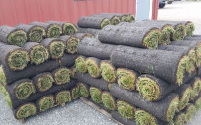 Rolls of fresh sod